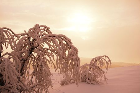 Frozen trees on the snowcovered grassland photo