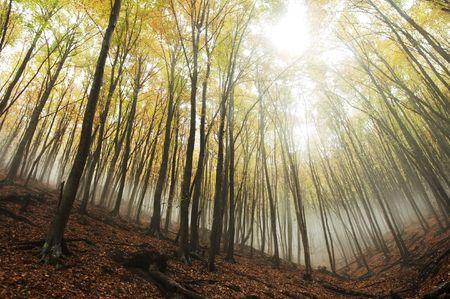 mistery: Fog in autumn forest