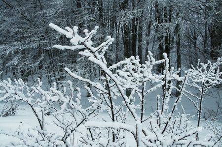 Winter forest in Crimean mountains Stock Photo - 2154861