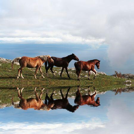 Three horses on mountains lake photo