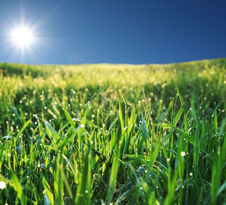 Wet grass and sunny sky photo