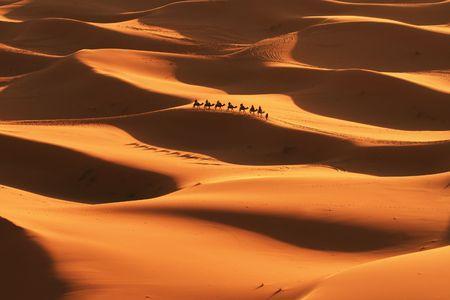 Safari in Sahara desert Stock Photo