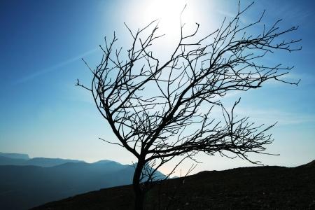 crimea: Tree silhouette in Crimea mountain