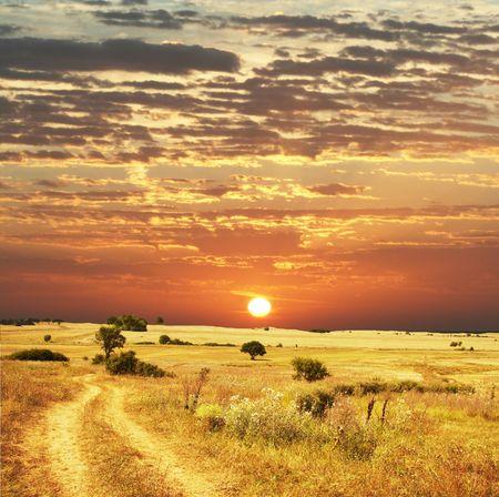 Green field on sunrise Stock Photo - 2862173