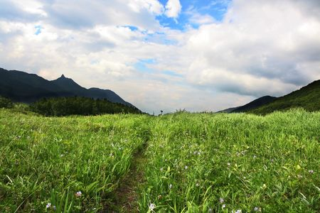 kamchatka: Prato di montagna verde sulla Kamchatka