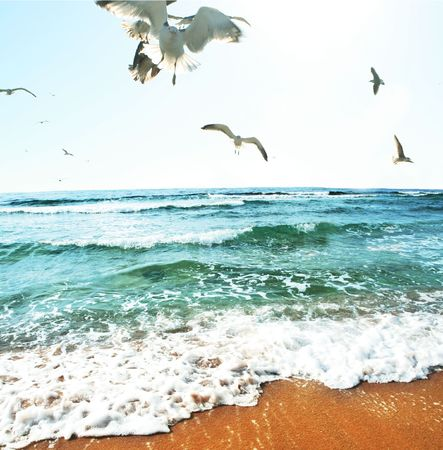 Sea gulls on coast photo