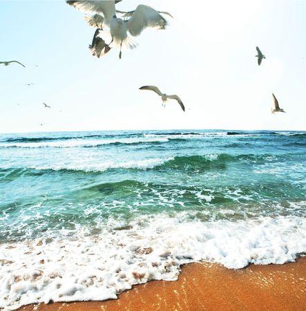 Sea gulls on coast photo