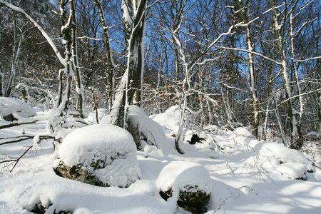 Winter season Stock Photo - 3150945