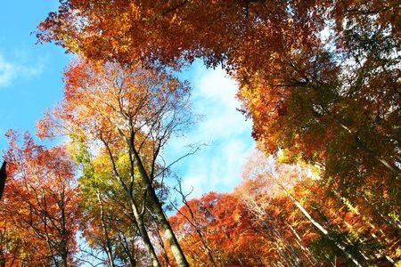 Autumn scene Stock Photo - 3229544