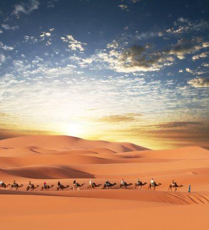 kamel: Karawane in W�ste Sahara  Lizenzfreie Bilder