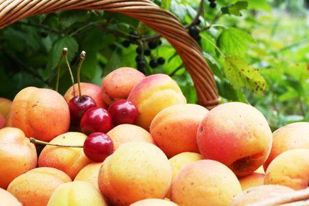 Fruits in garden photo