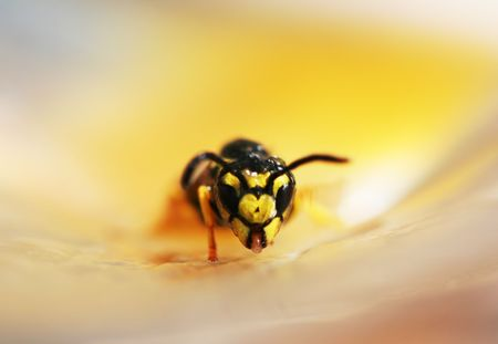 constricted: Bee