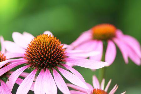 herbage: Flowers Stock Photo