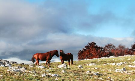 Horse Stock Photo - 3337837