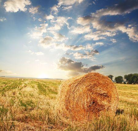 Rural landscapes Stock Photo - 3446370