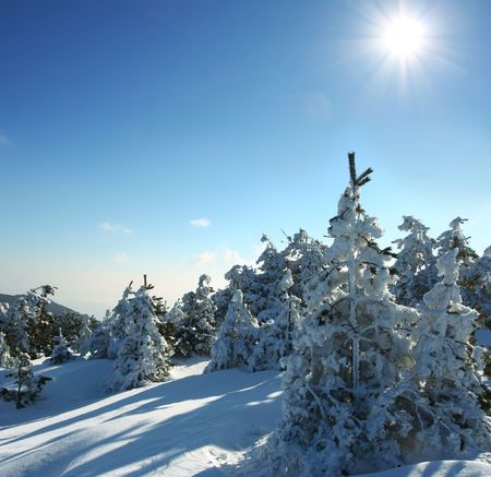 Winter forest in mountains Stock Photo - 3650004