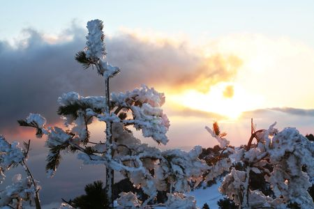 froze: froze trees at dawn Stock Photo