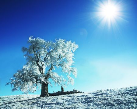 Alone frozen tree Stock Photo - 3662282