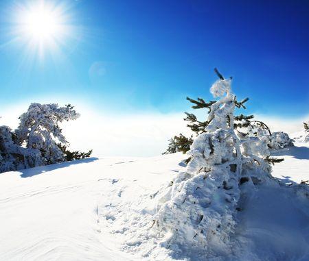 Christmas theme- frozen trees Stock Photo - 3662262