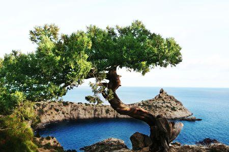 beack: sea shore in Crimea Stock Photo