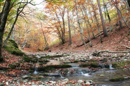 Beautiful small river in forest photo