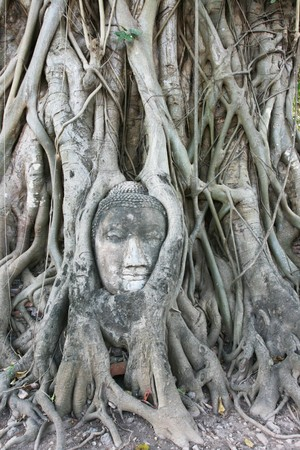 Famous face in Ayutthaya, Thailand Stock Photo