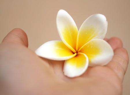 Flower on hand photo