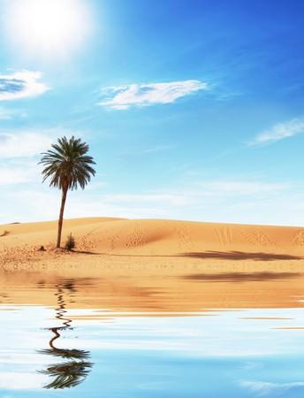 desierto del sahara: Palm en el desierto del Sahara  Foto de archivo
