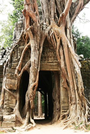 swallowing: Tree swallowing ancient ruins of Angkor Wat Cambodia Stock Photo