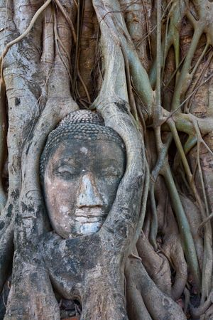 budda: Stone budda head in  Ayutthaya