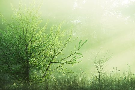 mythical: Magic forest of misty Stock Photo