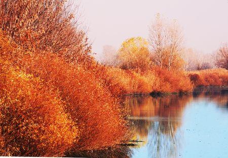 beautiful woodland: Autumn scene