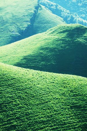 Summer green hills photo