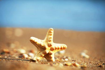 Starfish Stock Photo - 5379869