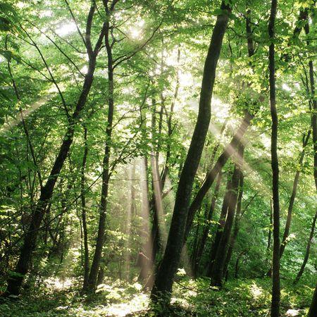 forrest: zomer bos Stockfoto