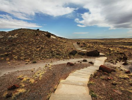 petrified forest photo