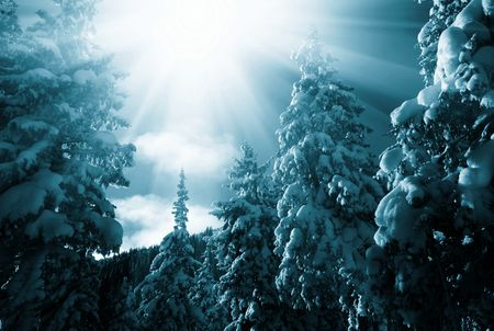 Winter forest in mountains Stock Photo - 5722551