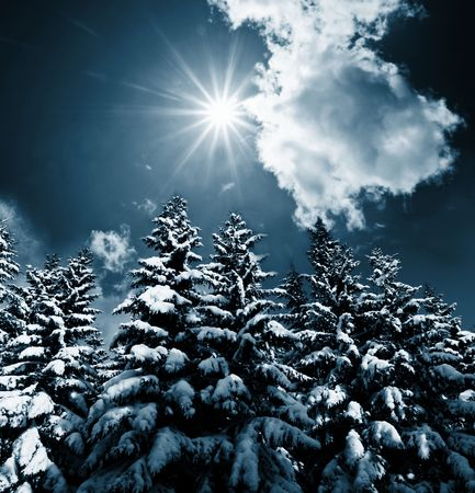 Christmas theme- frozen trees photo