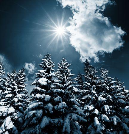 frozen trees: Christmas theme- frozen trees Stock Photo