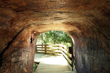 tunnel in seqouia photo