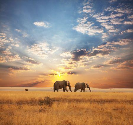 elefant: Elefanten