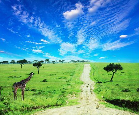 parch: african landscapes