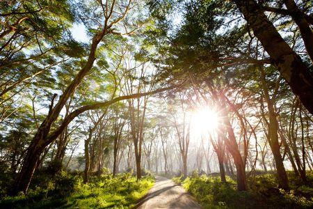 dense: rain forest