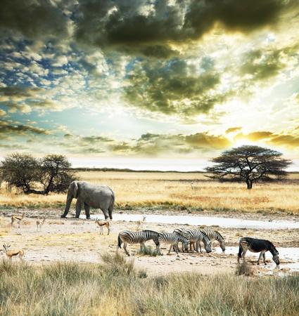 wild Africa Stock Photo - 6857370