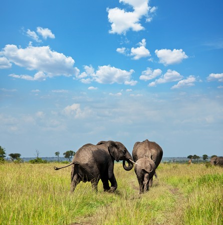 Elephant and zebras on waterhole photo