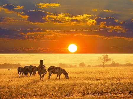 namibia: zebras on lake