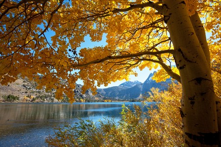 fall scenery: Autumn scene
