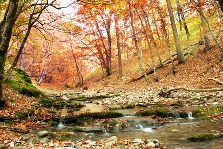 Autumn forest Stock Photo - 6998761