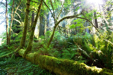 national forest: rain forest
