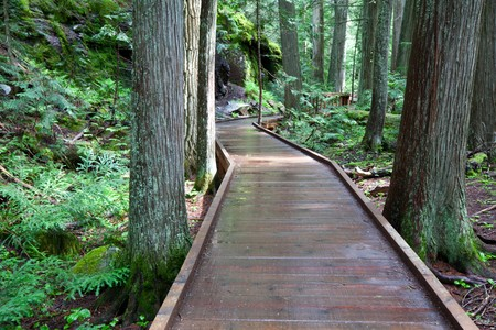 boardwalk in forest Stock Photo - 7266095